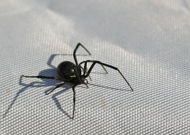 Kuriózní zjištění australského vědce: Staré diesely vábí pavouky ve velkém