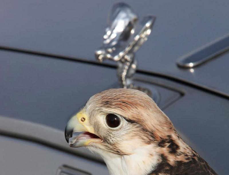 Rolls-Royce Phantom: speciality pro Spojené arabské emiráty: - fotka 20