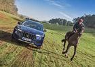 Podivnější závod jste ještě neviděli. Porazí 275 koní od Maserati jednoho závodního oře?