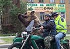 Medvěd se v Rusku projížděl na motocyklu Ural. V běžném provozu! (video)